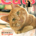 cats200511